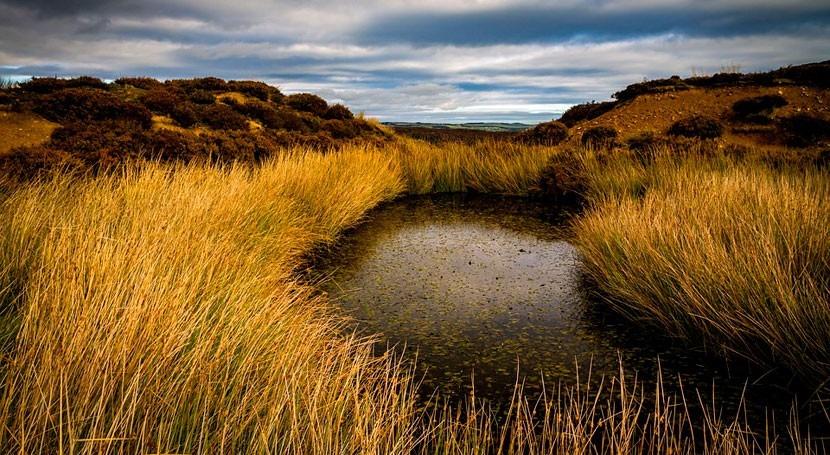 calentamiento estanques, posible responsable acelerar cambio climático