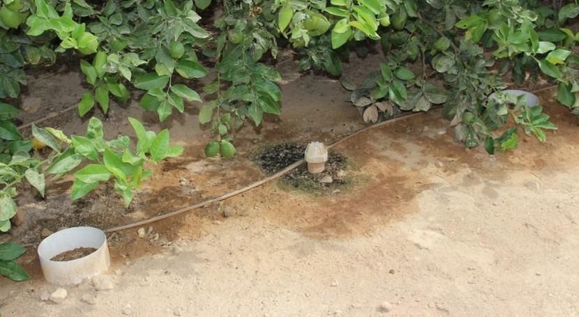 Nuevas estrategias de riego de cítricos en situaciones de escasez