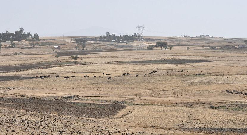 sequía pone riesgo más 10 millones personas Etiopía