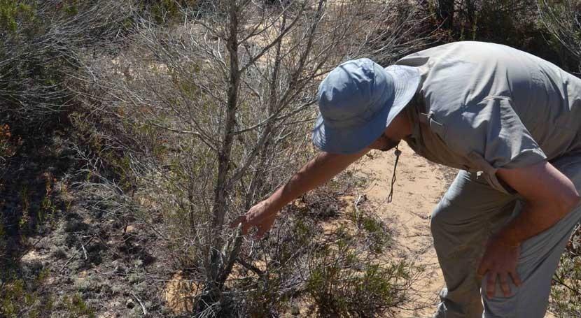 ¿Cómo se comportan comunidades matorrales sequía extrema?