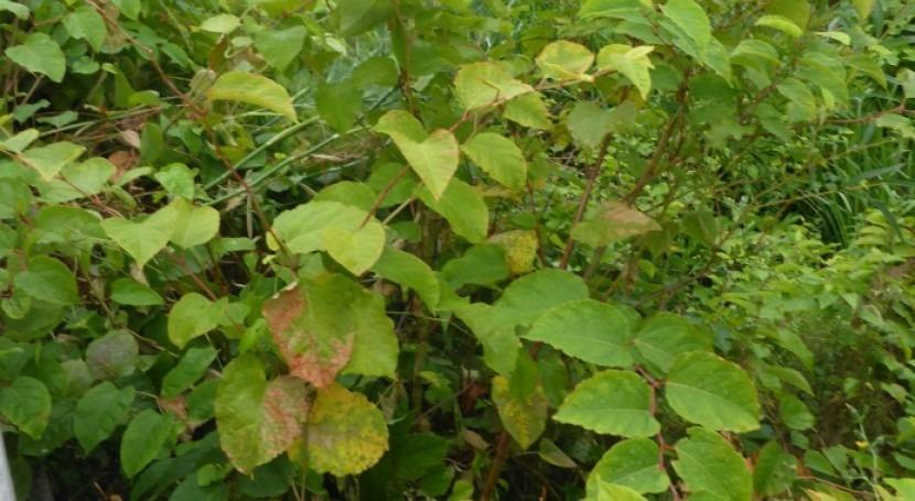 URA finaliza campaña erradicación y control especies invasoras cuencas CAPV