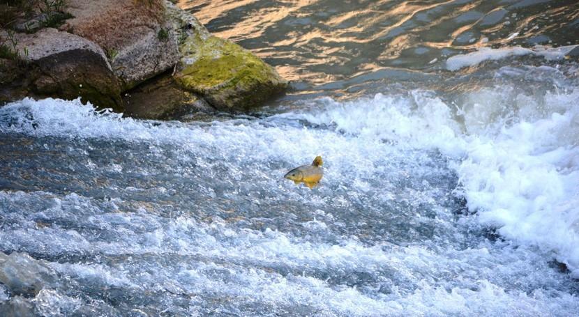 "proyecto LIFE+ Segura Riverlink, revista ""Fishes in Mediterranean Environments"""