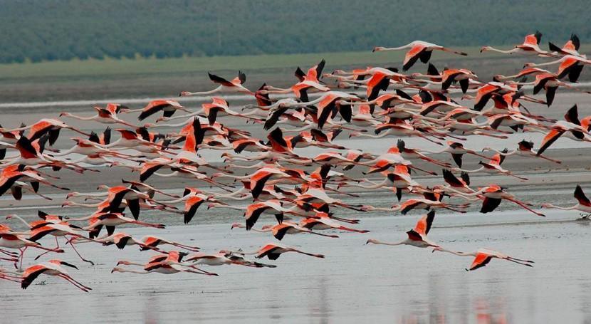falta agua y viento frenan reproducción flamencos Laguna Fuente Piedra