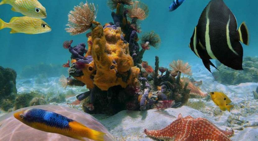 actividades acuáticas que puedes hacer si visitas Cancún