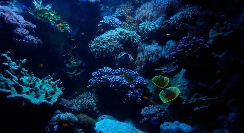 cambio climático podría aumentar mercurio tóxico vida marina