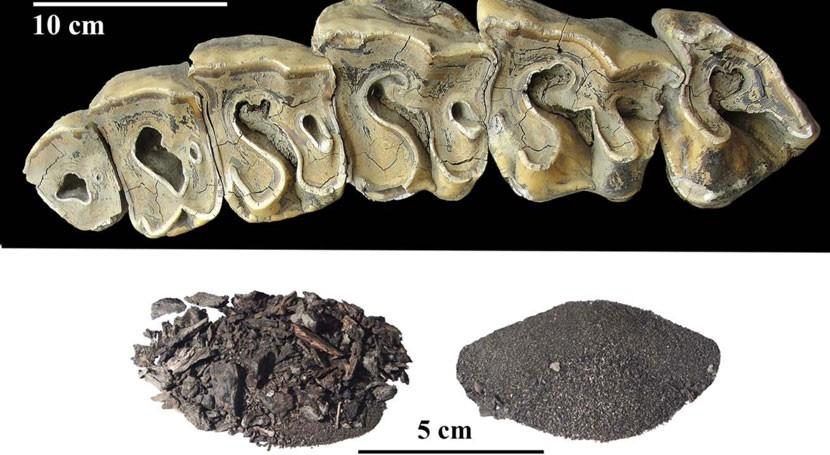 fósil rinoceronte 5.000 años confirma que clima Siberia era similar al actual