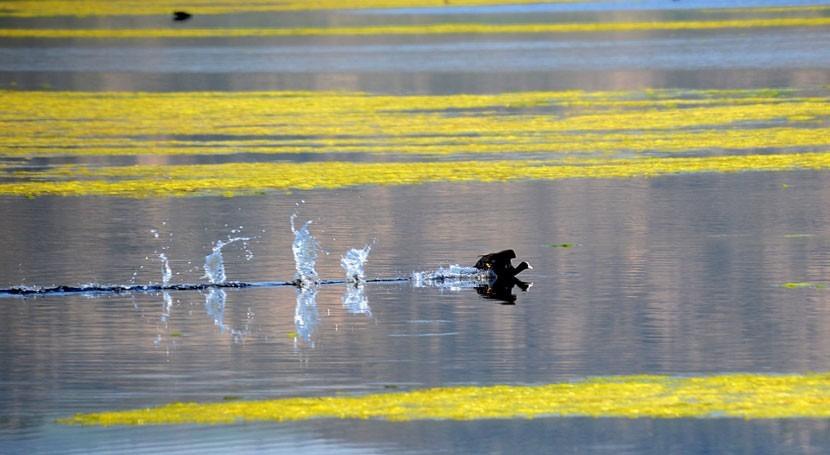 40% humedales Ramsar España, estado preocupante