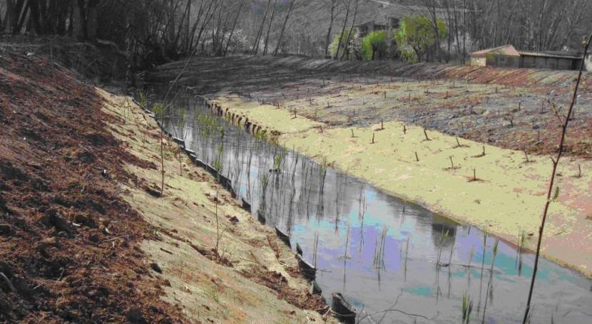 Técnicas Bioingeniería mejorar estado ecológico y estabilizar márgenes ríos