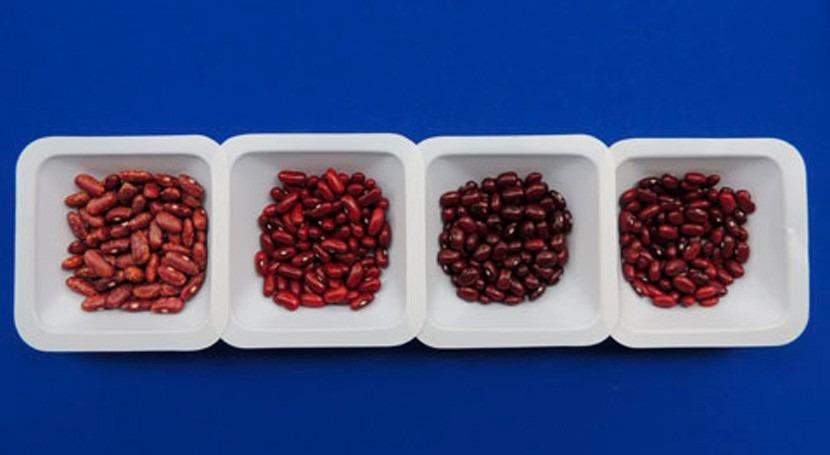 Judías y frijoles: ¿Qué hace resistentes sequía?