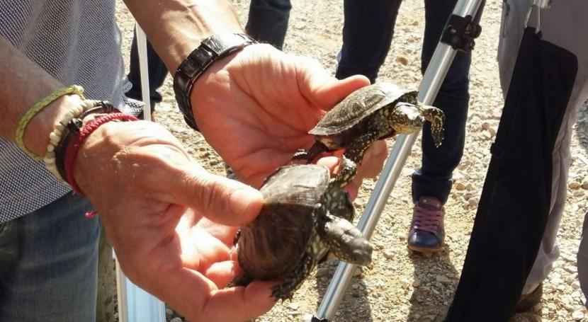 Se liberan 15 galápagos europeos Reserva Natural filtro verde Tancat Milia