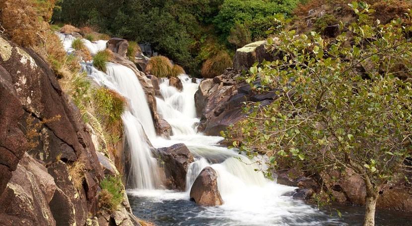 Gobierno gallego suelta 84.300 ejemplares trucha y salmón docena ríos Lugo
