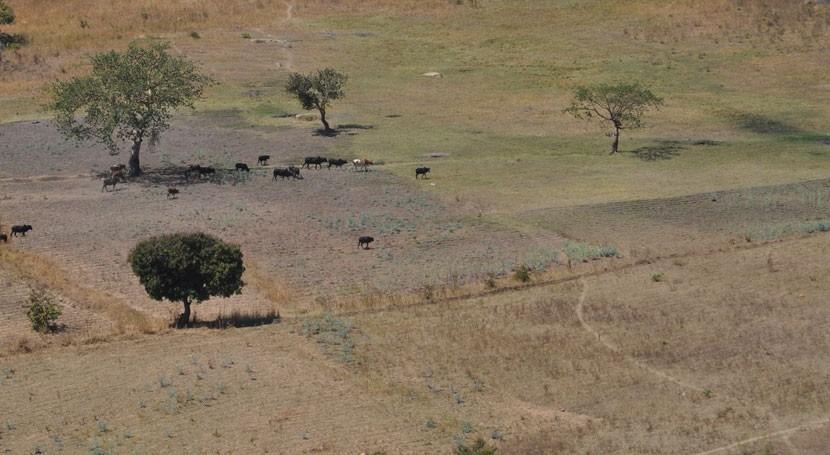 50 millones personas sur África están amenazadas sequía