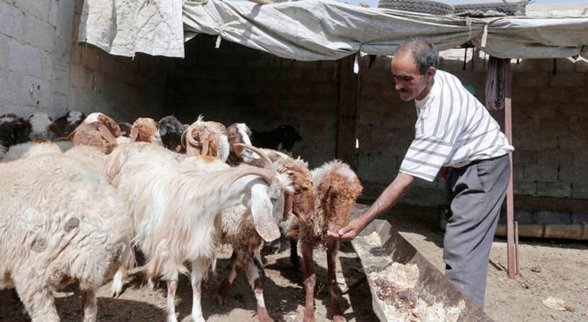 conflicto y sequía ponen riesgo producción agrícola Siria