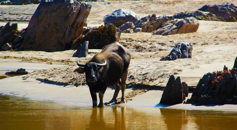 India realizará 30 trasvases agua principales ríos combatir sequía
