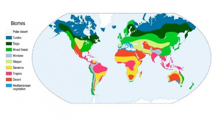 carbono almacenado lagos se ha triplicado debido alteración ciclos nutrientes