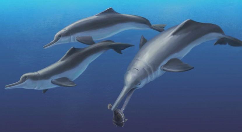 hallazgo Panamá arroja luz evolución cetáceos agua dulce