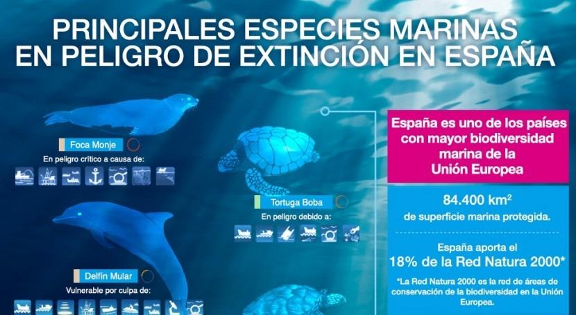 Fundación Aquae nos recuerda que hay 28 especies marinas amenazadas España