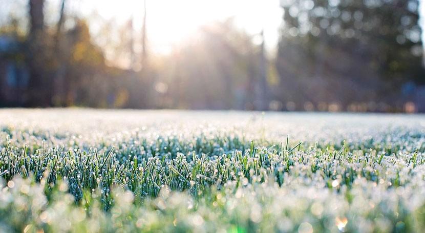 ¿Cómo evitar daños causados heladas cultivos?