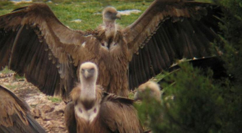WWF exige aprobación urgente PRUG Hoces Riaza 11 años retraso