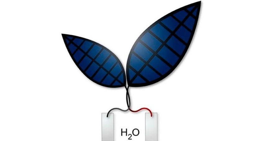 Hoja biónica 2.0: energía solar divide agua producir combustible líquido