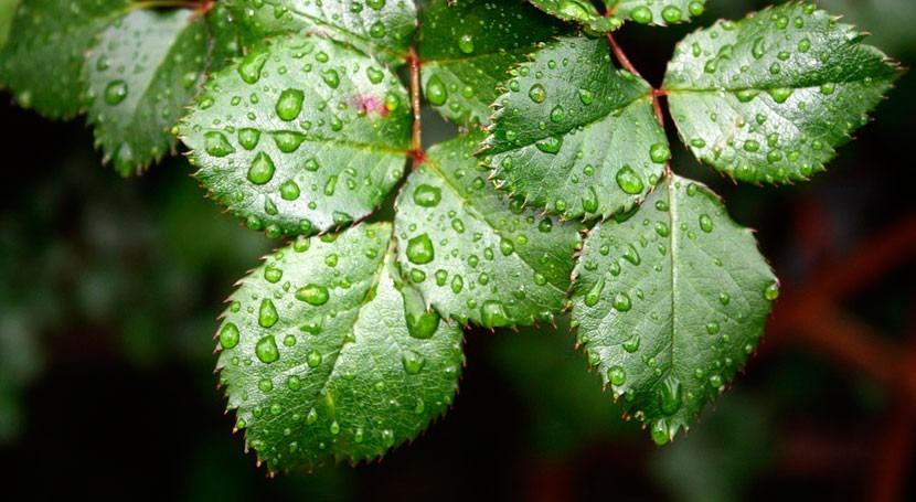 Matemáticas y biología, unidas explicar adaptación plantas al cambio climático