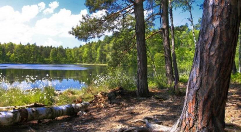 acción humana bosques está acelerando cambio climático