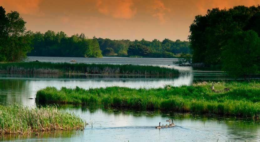 Resultado de imagen para pantanos de centla Pantanos Centla Tabasco humedales