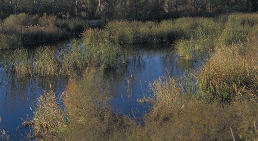 Comunidad Madrid trabaja nuevo plan recuperar y conservar humedales