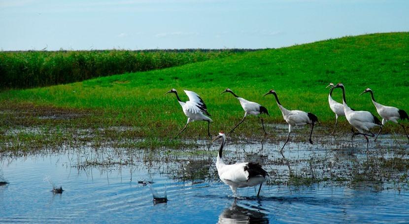 WWF pide Unión Europea protección ríos, humedales y acuíferos