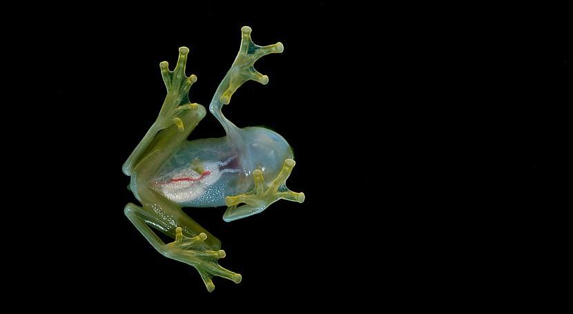 ¿Pueden anfibios y reptiles mejorar análisis cambio climático?