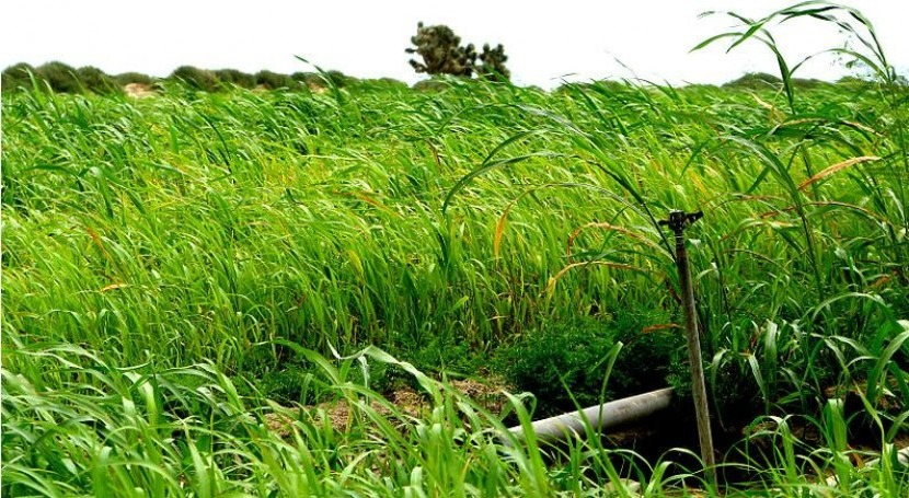 En Europa se espera que los rendimientos crezcan y la tierra cultivada disminuya