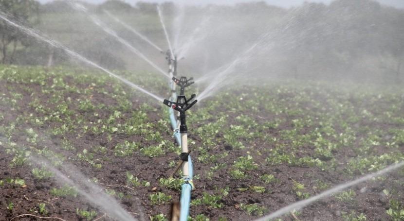 impacto COVID-19 agricultura