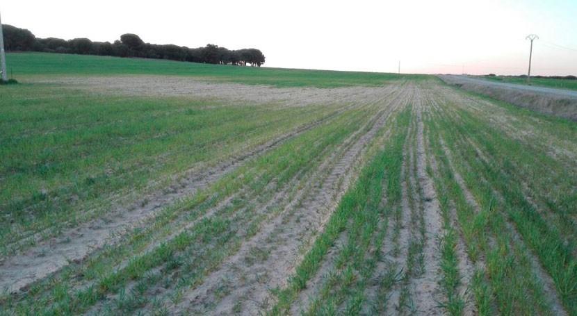 Alerta España: sequía deja graves consecuencias agricultura y ganadería