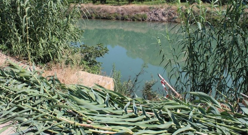 Ingeniería ecológica: herramienta eliminar caña invasora río Segura