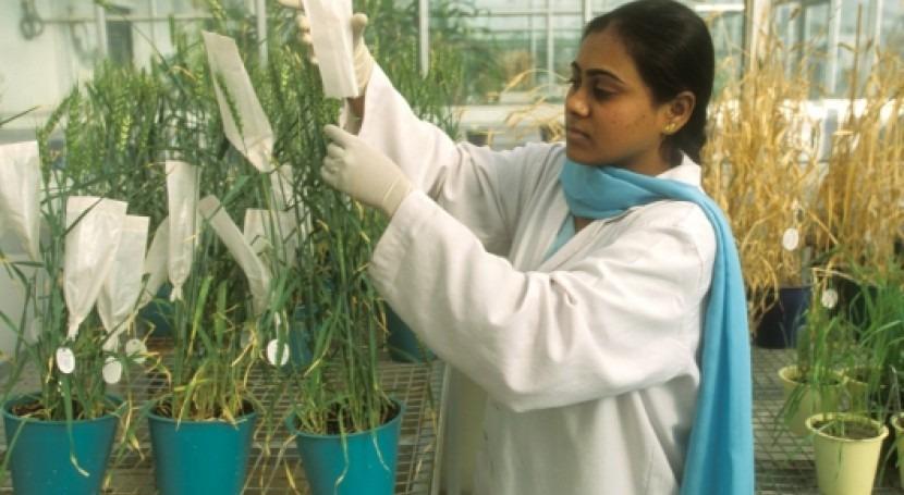 ¿Cómo integrar diversidad genética planes adaptación al cambio climático?