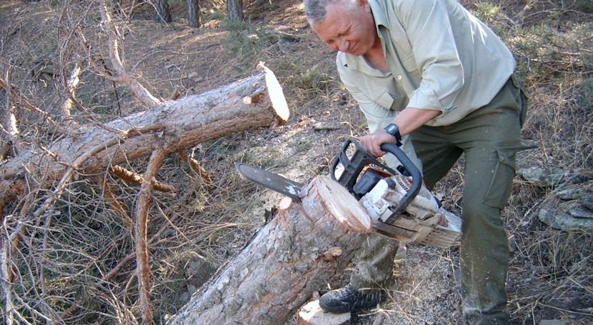 pinares, indicadores efectos cambio climático masas forestales