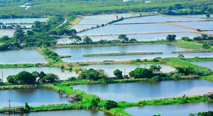 Libelium reduce 50% pérdidas piscifactorías Vietnam controlando calidad agua
