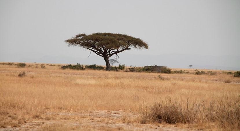 Kenia declara sequía desastre nacional