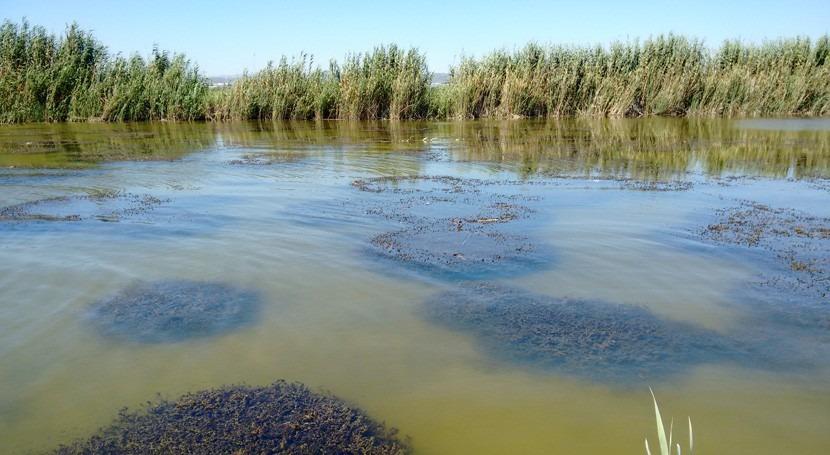 Albufera recupera praderas vegetación acuática