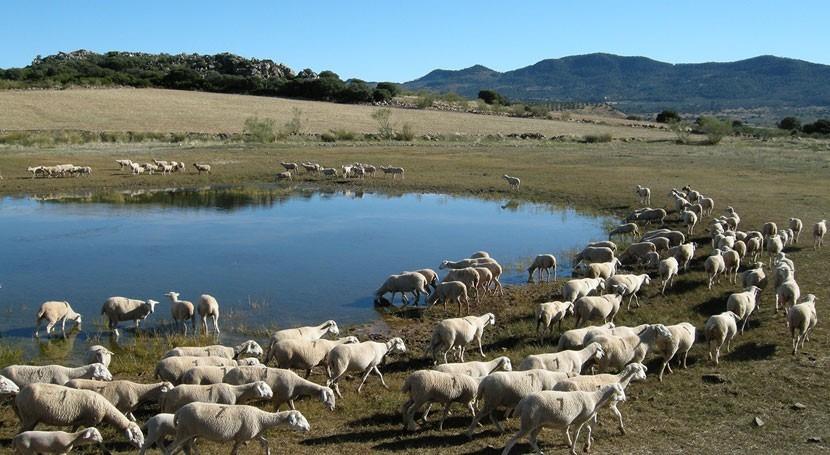 ¿Cómo proteger humedales gracias diversidad anfibios?