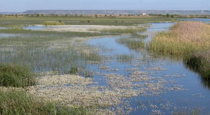 Laguna Nava se incorporará Ruta Europea Aves