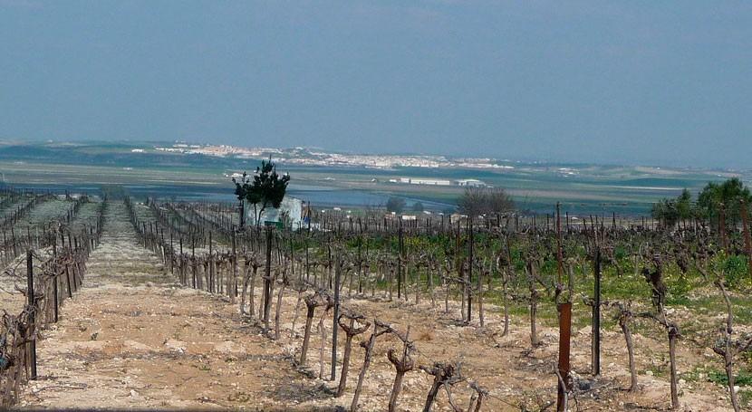últimas lluvias Guadalquivir provocan perdidas millonarias agricultores