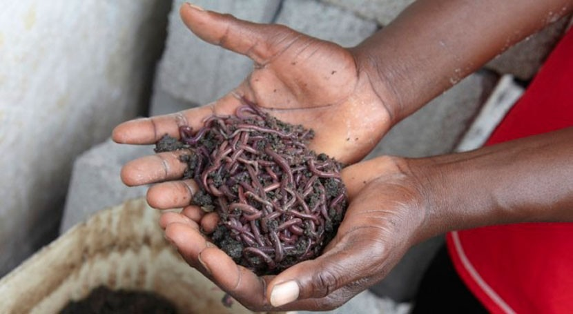 40 niñas y niños mueren cada hora mundo causa diarrea, Oxfam