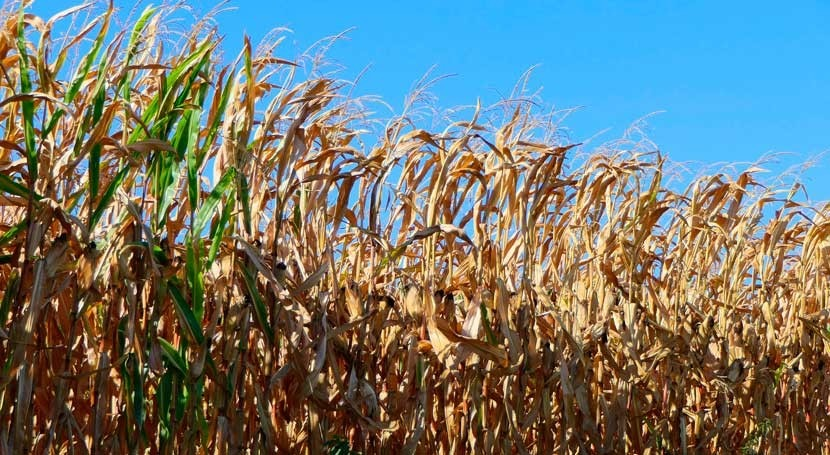 altas temperaturas y sequía afectan cultivos europeos