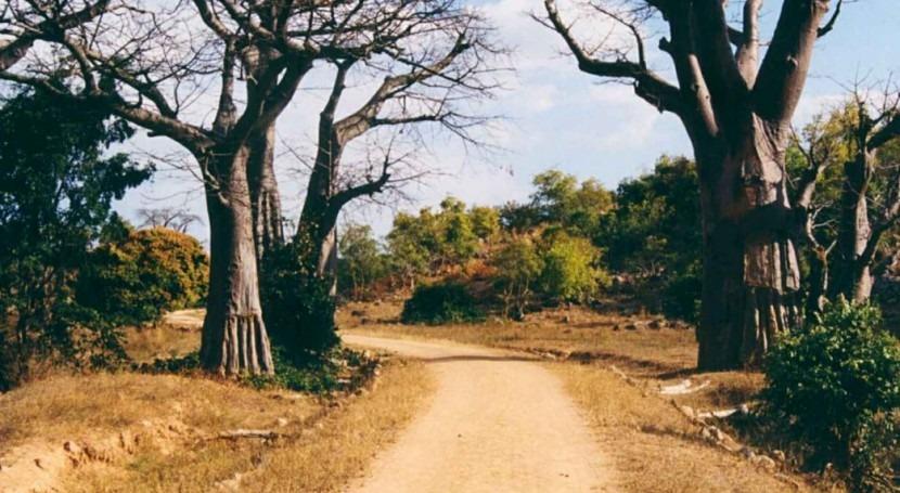 Declarado estado desastre Malaui sequía