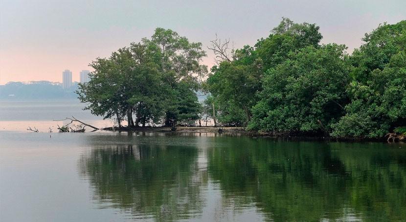 conservación manglares, cada vez más valiosa gracias al comercio carbono