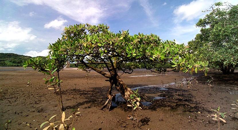 historia manglares Latinoamérica: despreocupación concienciación