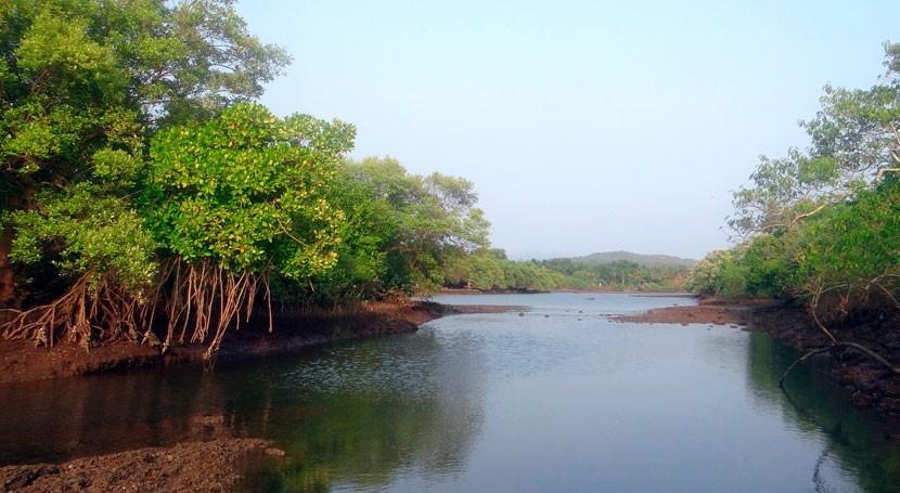 ¿Conoces importancia manglares?