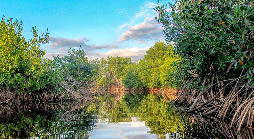 importancia manglares