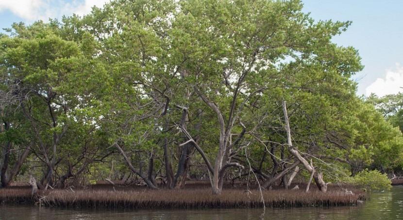 Manglares y arrecifes coral, primera línea defensa inundaciones